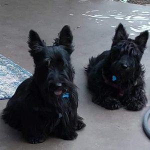 Rhonda's dogs